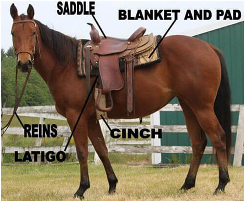 It Is Important To Saddle Your Horse Properly Not Only For The Safety Of But As Well